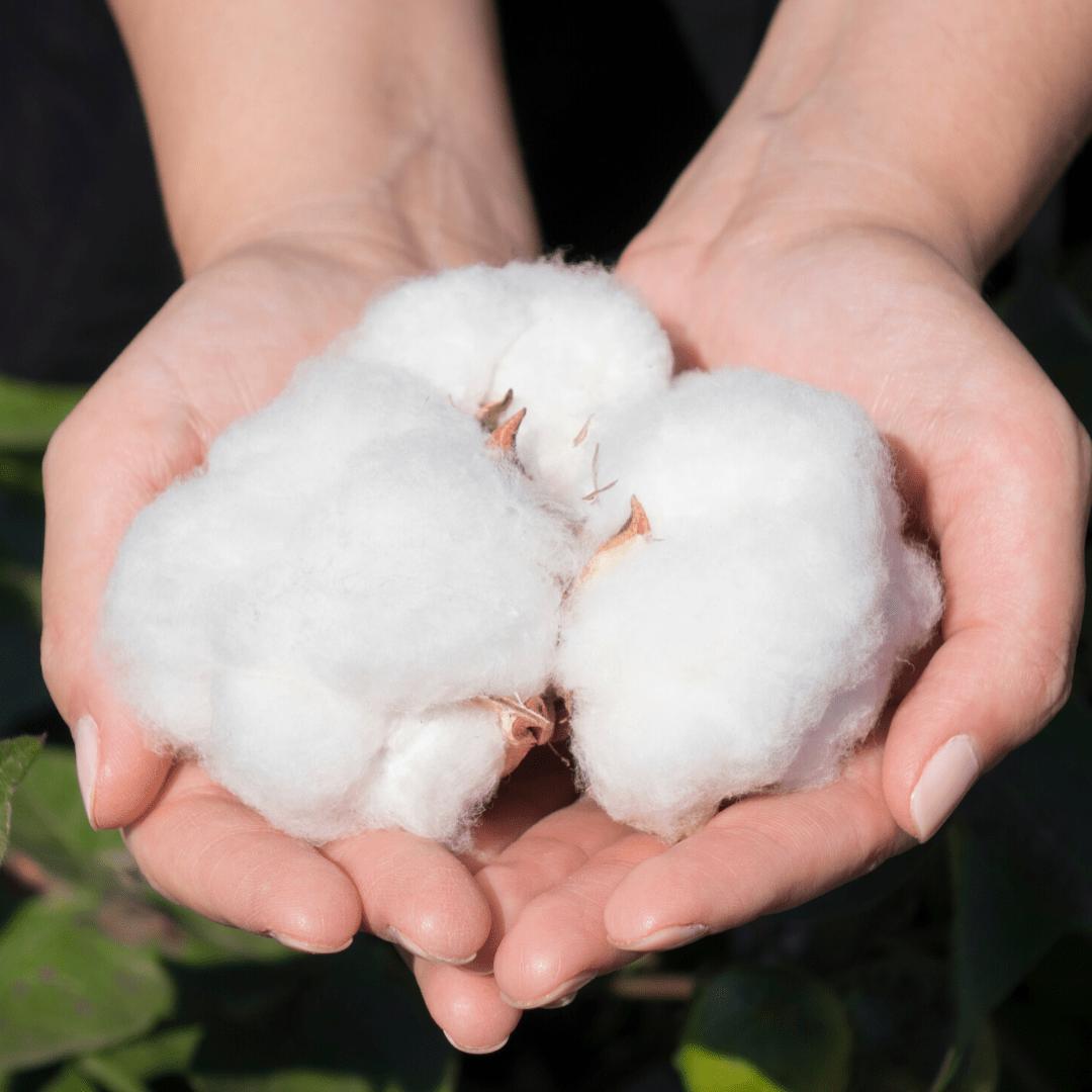 Coton biologique. Culture du coton 100% naturelle. Marque française éthique et responsable. Breizh Traveller marque Bretagne. Vêtements coton bio