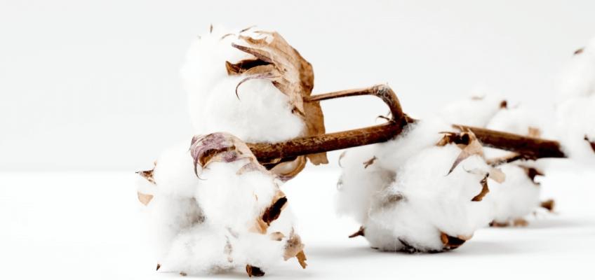 coton bio breton